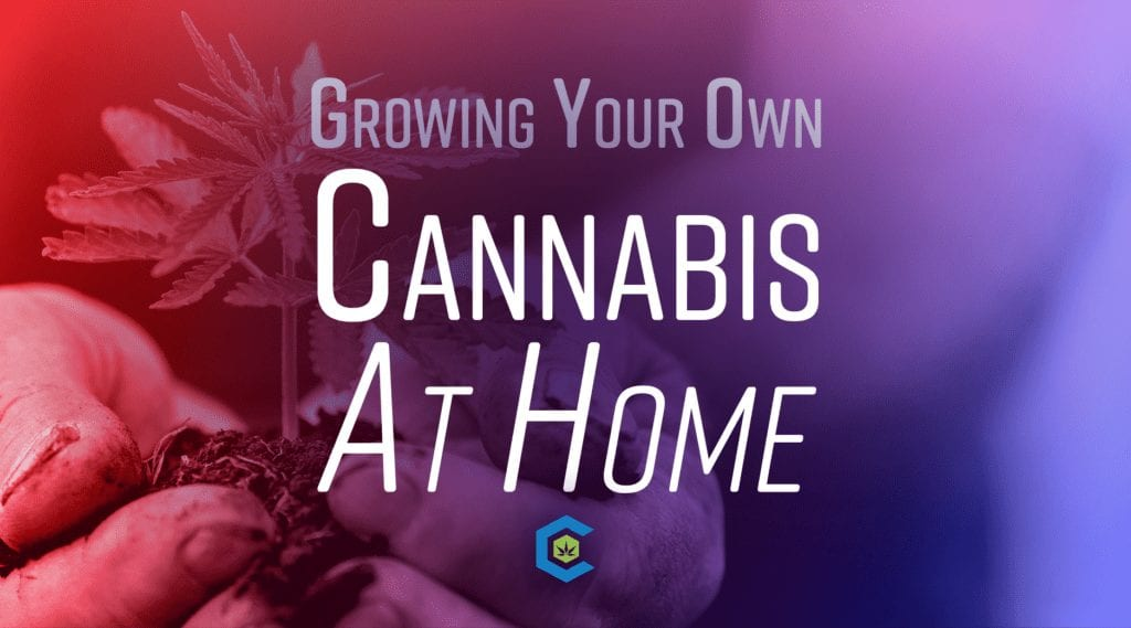 BlogHeader Grow Your OwnCannabis At Home