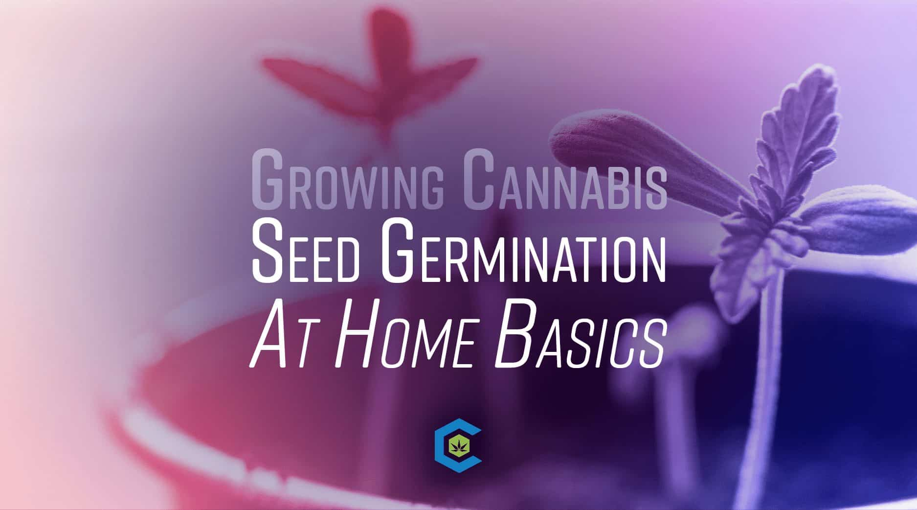 BlogHeader Growing Cannabis at Home - Seed germination